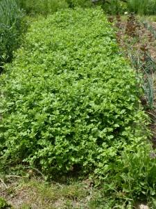 jardin mai 2011 007
